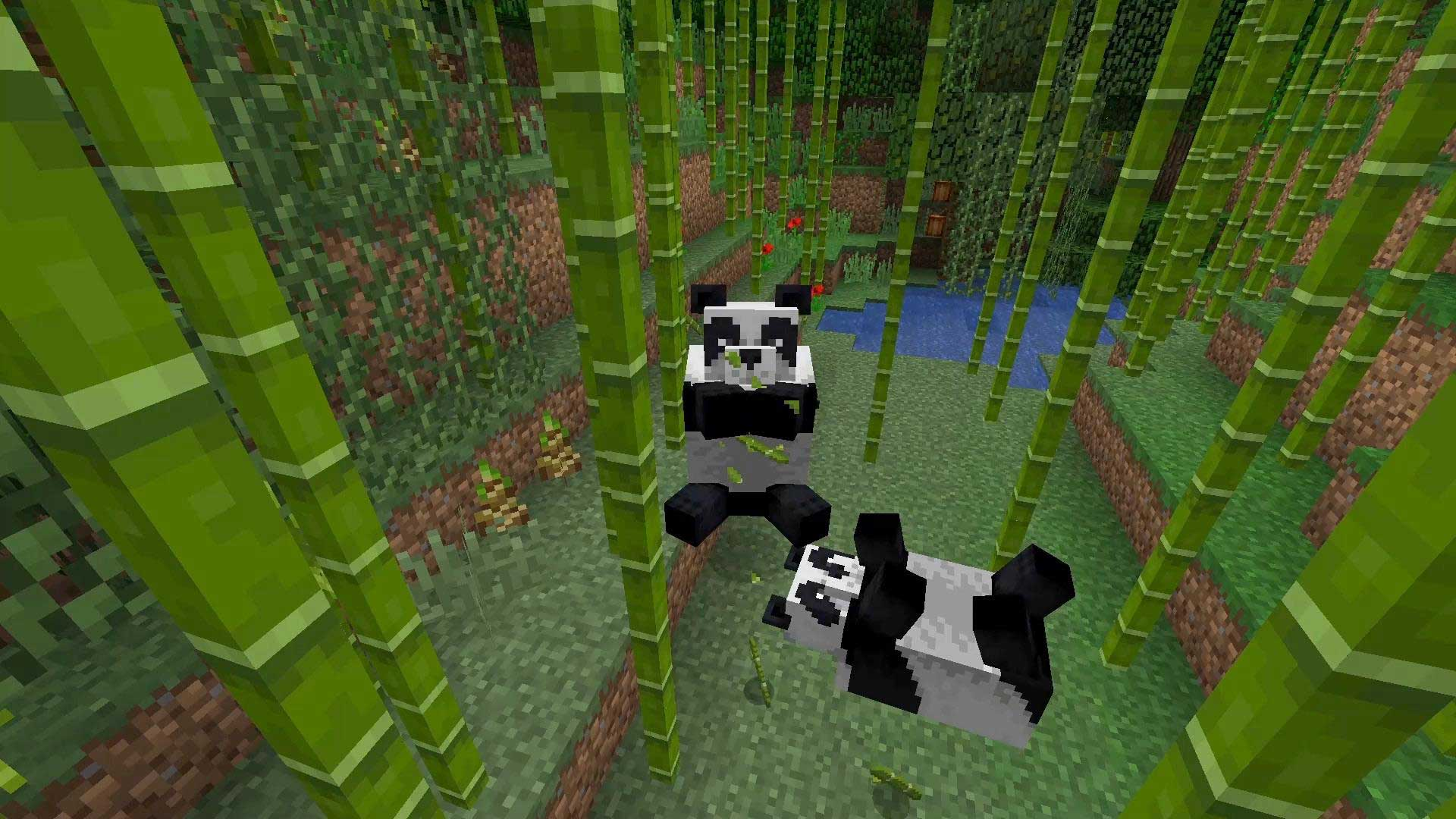 how to tame a panda in minecraft education edition